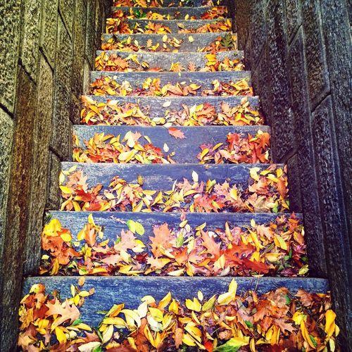 Stairs Autumn Autumn Leaves Walking Around