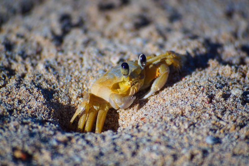 Close-up of crab on sand