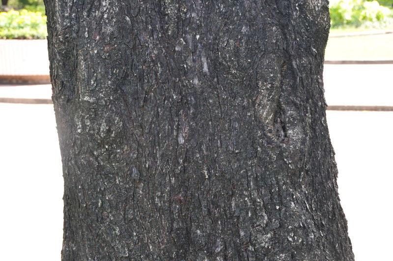 Bark Close-up Day Nature No People Outdoors Textured  Tree Tree Trunk Wood - Material