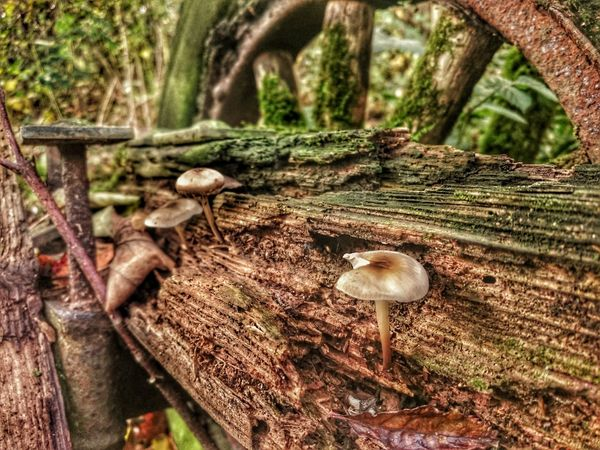 Outdoors Close-up Mushrooms 🍄🍄 Beauty In Nature When Nature Takes Over Deterioration Mossporn Wheel Wooden Wheel Rotting Away Rotting Wood Forgotten Things Old But Awesome Fungus 🍄 Fungus Among Us Tiny Planet