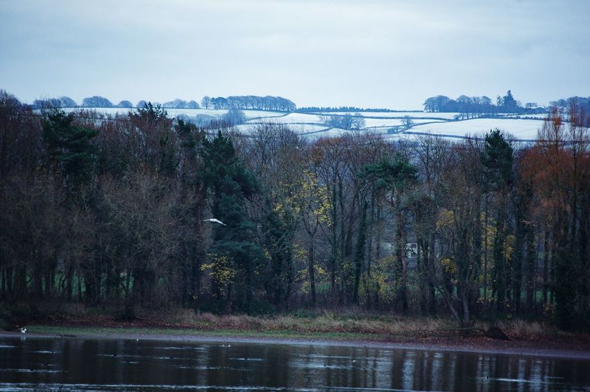 Water Day No People Outdoors Sky Lake Nature Beauty In Nature Tree Snow On Hills Chew Valley Lakes Winter Trees Bird
