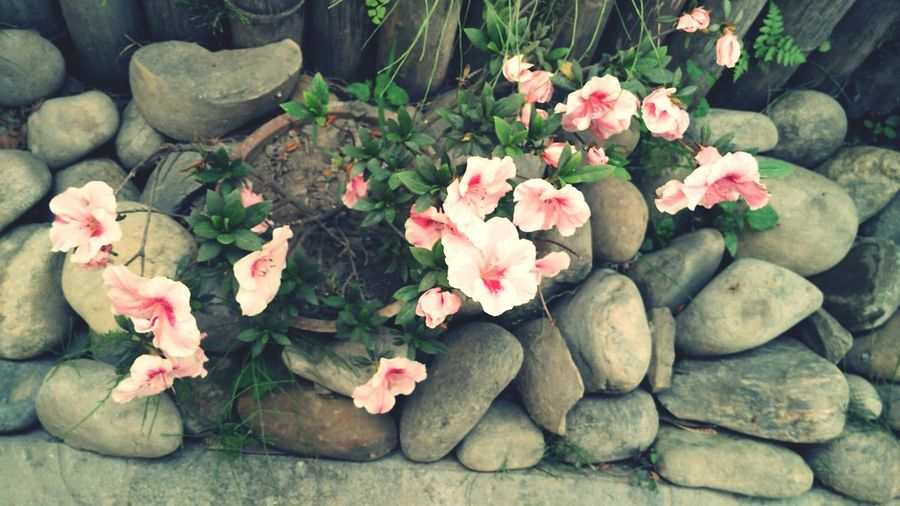 Flowers Nepal Stone