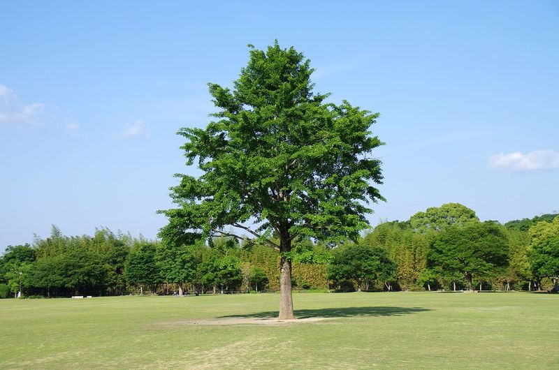 Hanging Out Plant Green Traveling Tree Park Peace Sky Oita 大分 Tokyo,Japan Alone Landscape Japan