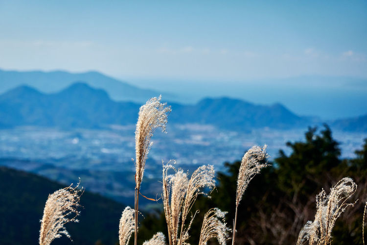 Selective Focus Blurred Background Blue Color Blue Background Plant Nature Growth Focus On Foreground No People Beauty In Nature Tranquility Day Mountain Tranquil Scene Sky Scenics - Nature Close-up Environment Outdoors Landscape Land Sunlight Mountain Range Cactus