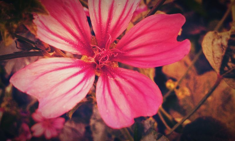 Hello World Pink Flower Nature Photography EyeEm Nature Lover Purity