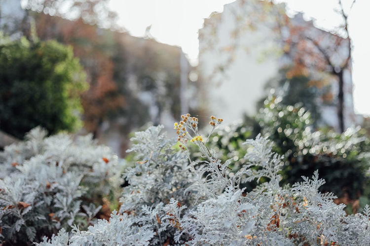 Plant Growth Nature Beauty In Nature Focus On Foreground Day No People Tree Close-up Tranquility Selective Focus Outdoors Green Color Frozen Lichen Bokeh Yellow Urban Urban Nature Grey