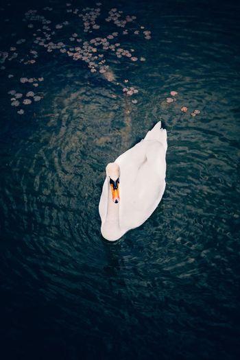 Swan Solo EyeEm