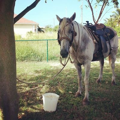 There is a horse in our yard! Horse Yearofthehorse Animal Picoftheday yard