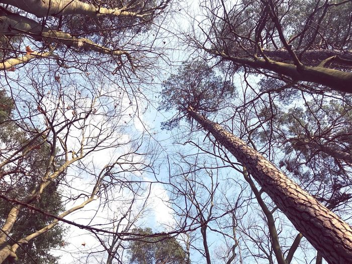 Spechthausen Waldspaziergang Wald Forrest Nature Forrest Photography Forrest Treescollection Trees And Nature Trees And Sky Trees Low Angle View Tree Branch Day Nature Outdoors Backgrounds Beauty In Nature Close-up Full Frame Sky