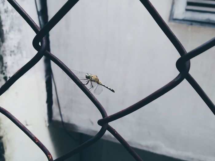 High angle view of dragonfly on chainlink fence