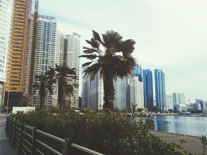 Busan Taking Photos Holiday 해운대 Urban Landscape Hello World Landscape