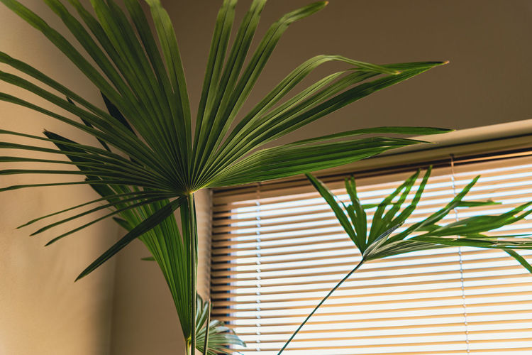 Close-up of palm tree leaves against wall