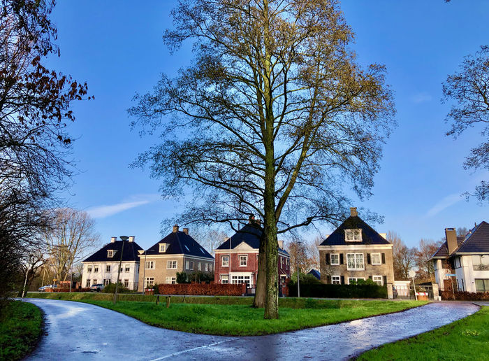 Houses and trees by road against blue sky
