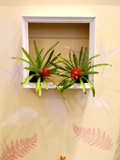 Potted plants on window sill of house