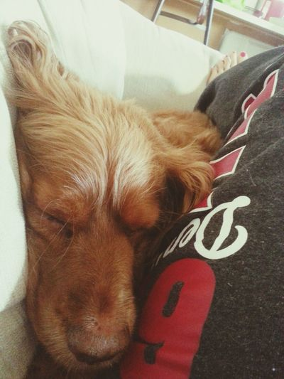 Basco snuggles ♥ Animallovers Enjoying Life Happinessisawarmpuppy