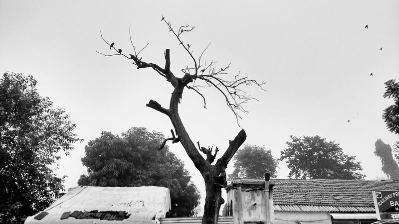 Tree Bare Tree Clear Sky Low Angle View Sky Tree Trunk Scenics Nature Outdoors Beauty In Nature Remote Non-urban Scene Dried Plant No People Travel To The New !Guj Trip TakeoverContrast Hdr Scape .. Monochrome Photography