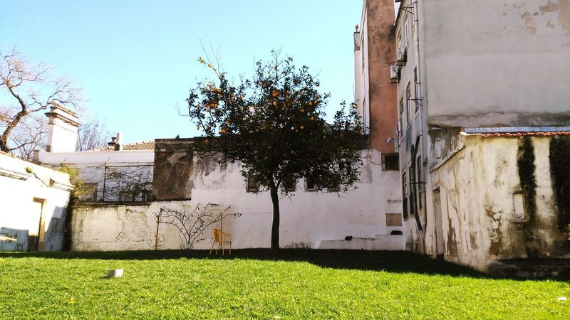 Lisboa Lemontree Wall Urban Landscape Urban Nature Urban Gardening