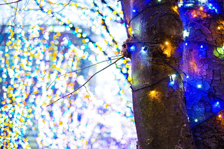 Fujifilm Low Angle View No People Illuminated Tree Outdoors Blue Branch Day Close-up