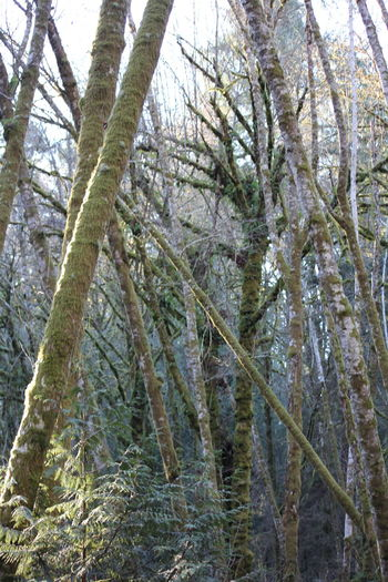Moss & Lichen Pacific Northwest  Pacific Northwest Beauty Beauty In Nature Branch Close-up Cold Temperature Day Forest Freshness Growth Low Angle View Moss Nature No People Outdoors Scenics Sky Tranquility Tree Winter