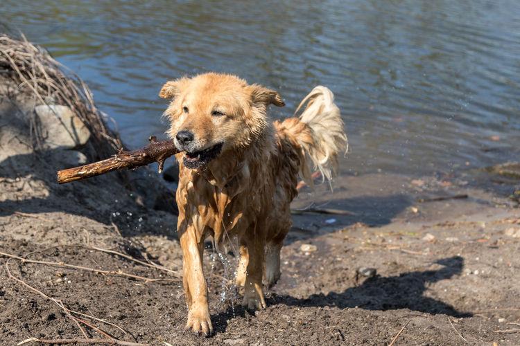 Portrait of dog on wet shore