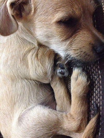 MEU querido John 🐶❤️ My Dog I Love My Dog First Eyeem Photo