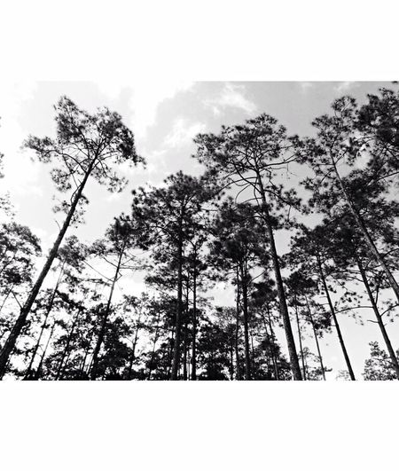 Zambrano Honduras🇭🇳 Bella Honduras Blackandwhite Future Photographer