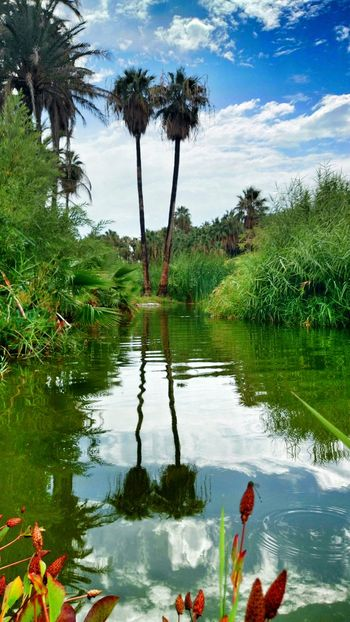 Oasis de San Ignacio, Baja California Sur Water Reflections Clouds And Sky