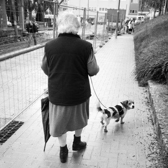 E a ti que che pica? - What's your problem? Dog Dogslife Puppy Puppydog Oldage Oldagepeople Streetphotography Blancoynegro Blackandwhite Blackandwhite Photography LG G4 Lg G4 Photography Santiago De Compostela Mobile Photography Fotografia De Rua