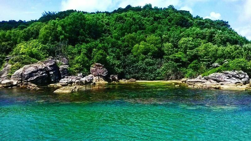 Water Tree Green Color Nature Waterfront Outdoors Beauty In Nature Vietnam Vietnamphotography Phuquoc Island Islandlife View ASIA Green Vibes Sea Shore Beach Beachphotography Seaside Travel Destinations Travel Travel Photography Adventure Seetheworld