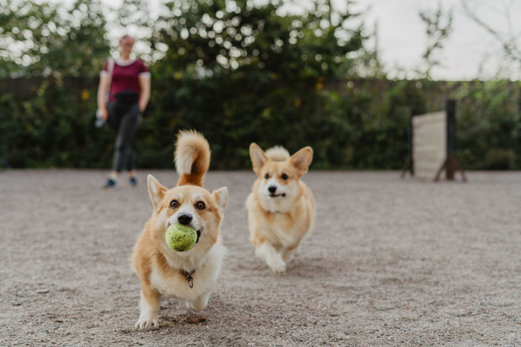 Dog walk, lifestyle One Animal Dog Canine Domestic Pets Mammal Domestic Animals Portrait Looking At Camera Focus On Foreground Real People Vertebrate Full Length People Day Lifestyles Front View Pet Owner