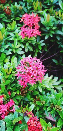 Flower Head Flower Pink Color Botanical Garden Leaf Close-up Plant Green Color