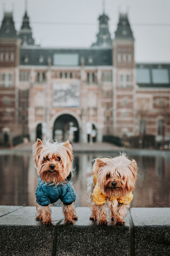 Portrait of dogs in the city