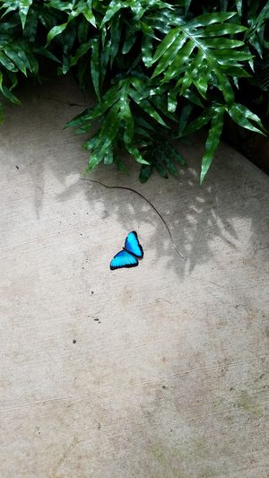 High Angle View Beauty In Nature One Animal No People Butterfly