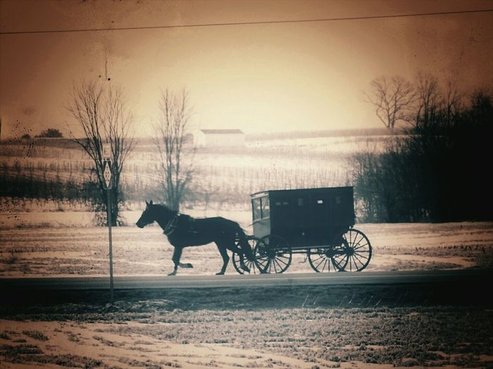 Showcase: February Country Life Lonelyroad Horse And Buggy Amish Life Eyeem Michigan Amish