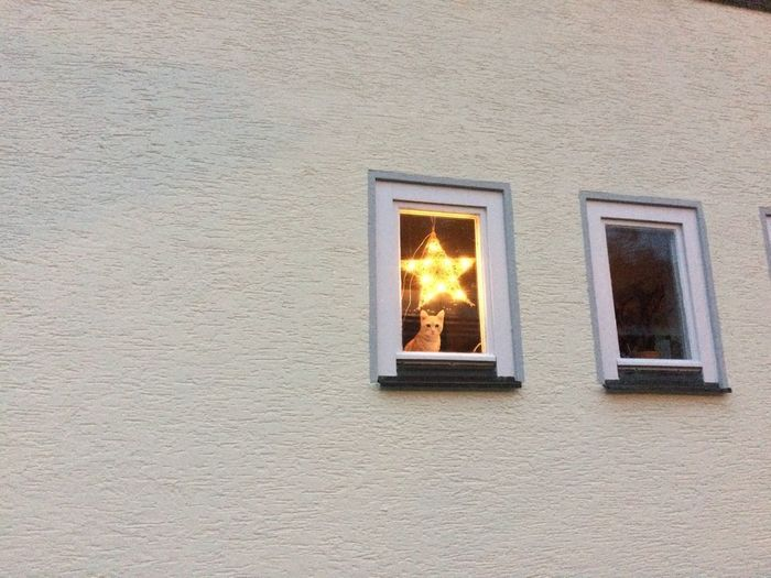 Window of illuminated building