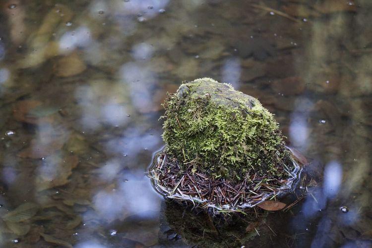 Stone in still water. Portland