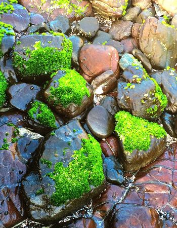 Reflection Water Rock - Object Moss Multi Colored Standing Water Plant Stream Nature Day Full Frame Green Waterfront Tranquility Green Color Collection Creativity No People Tranquil Scene Non-urban Scene Beach Combing Beach Photography Beach Co Visit Oman
