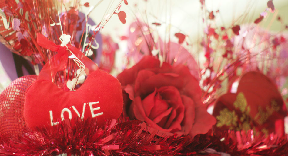 Beauty In Nature Flower Red Suzanne Powers, Valentine,red,Valentine Celebration,love,fun,