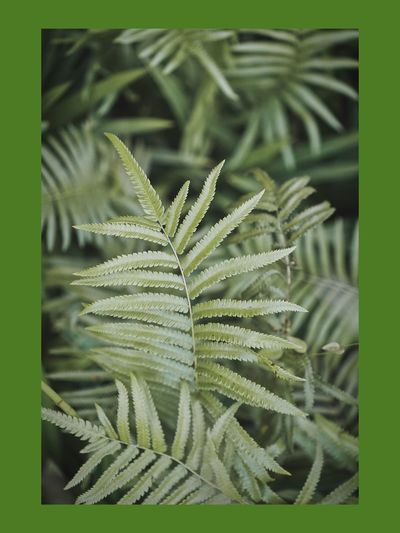 #greenplants
