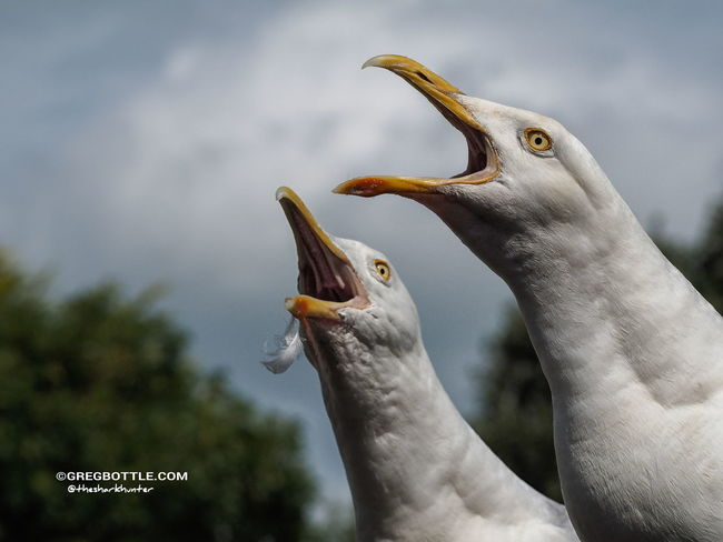 Our resident Seagulls EyeEm Nature Lovers Photographing Wildlife Nature_collection Bird Watching