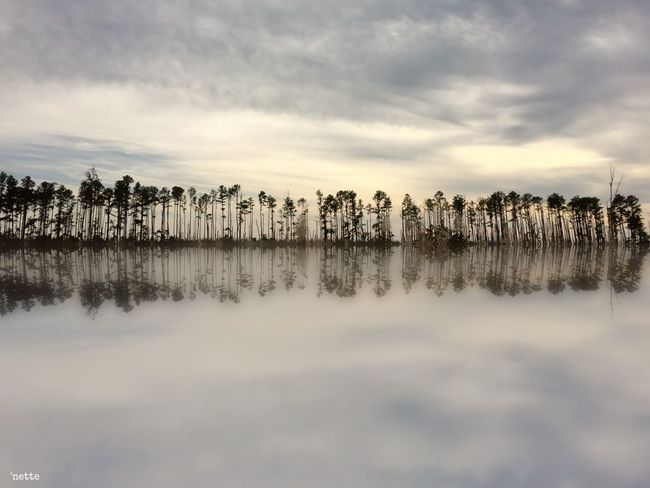 Treeline Reflection Blackwater National Wildlife Refuge