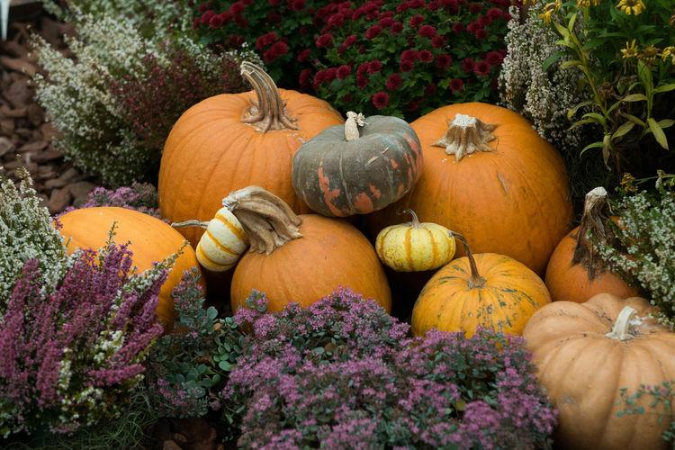 Autumn Halloween Agriculture Autumn Fall Freshness Halloween Nature No People Organic Pumpkin Vegetable
