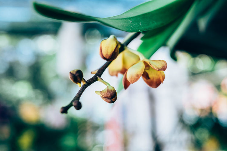 orchid Beautiful Copy Space Exotic Gardening Hanging Orchid The Week On EyeEm Backgrounds Beauty In Nature Bokeh Close-up Delicate Flower Flower Head Fragility Freshness Growth Leaf Nature Orange Color Outdoors Plant Selective Focus Yellow My Best Photo Springtime Decadence