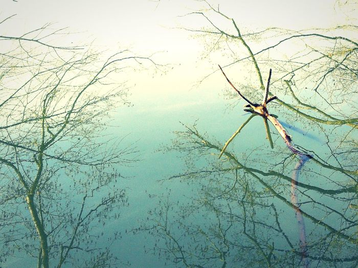 Reflections White NoPeopleAround Nature_collection Surreal Scene Blue And White Stripes Branches Refelection In Water Nature Environment Water No People Backgrounds Tree Rural Scene Beauty In Nature Outdoors Day Branch Shades Of Winter EyeEmNewHere