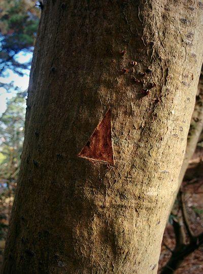 Trail Sign Triangle Tree Bark