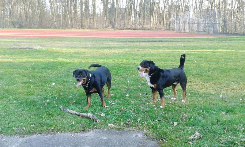 Freya Mit Rocky Enjoying Life Taking Photos Dogs Of EyeEm EyeEm Dog Lover Hunderunde zusammen mit Hundekumpel 'Rocky' auch immer wieder mal gerne Hunde Dogs Life Dogsofeyeem In Deutschland Nordrhein-Westfalen
