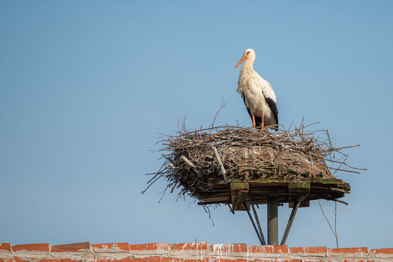 Low angle view of bird perching on nest against clear sky