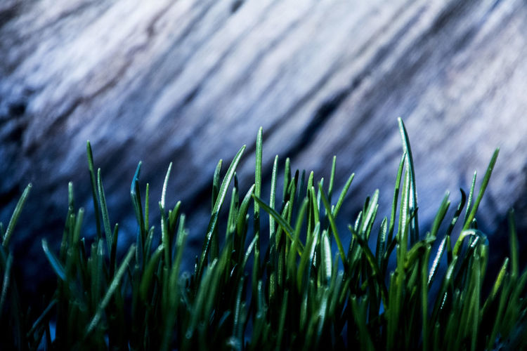 Backgrounds Close-up Day Grass Growth Leaf Nature No People Outdoors Water