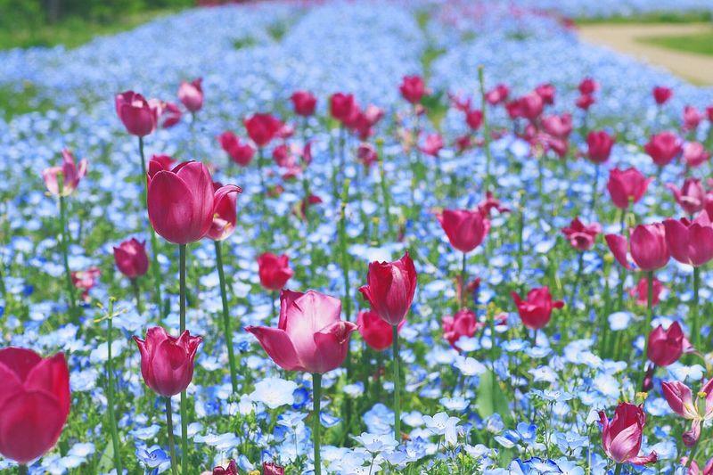 Japan Photography OpenEdit EyeEm Best Shots Tommy@collection EyeEm Japan Japan 日本 Flowers Flower EyeEm Nature Lover 花