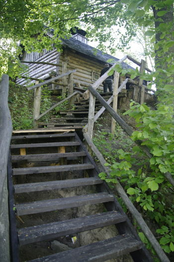 Staircase Plant Architecture Built Structure Steps And Staircases No People Day Tree Nature Outdoors Railing Low Angle View Growth Wood - Material Abandoned Building Exterior Plant Part Leaf Green Color Metal